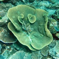 Climate will damage reefs 'at different rates'