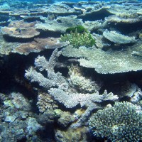 The corals of Lord Howe Island