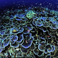 Coral vision: evidence for an opsin-based photosensory system in coral planulae