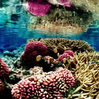 Recipe for killing a coral reef