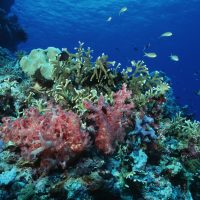 Coral reef winners and losers in a warmer world