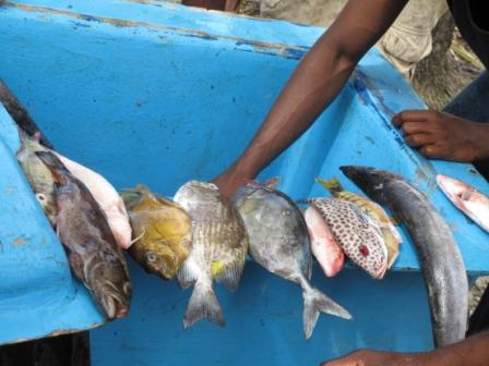 Local trade in reef fish in Melanesia. Credits: Pip Cohen