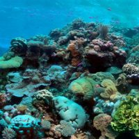 Coral reefs 'ruled by earthquakes and volcanoes'
