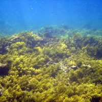 Bringing corals back from the brink