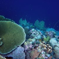 Regulators of coral reef diversity in deep time and space