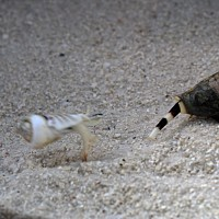 Jumping snails left grounded in future oceans