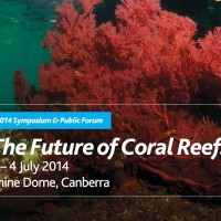 Spotlight on the coral reefs of the future