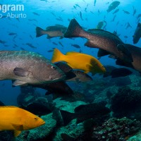 Climate change could stop fish finding their friends