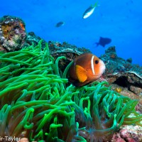 Cost-efficient management of multiple uncertain threats to coral reef ecosystems