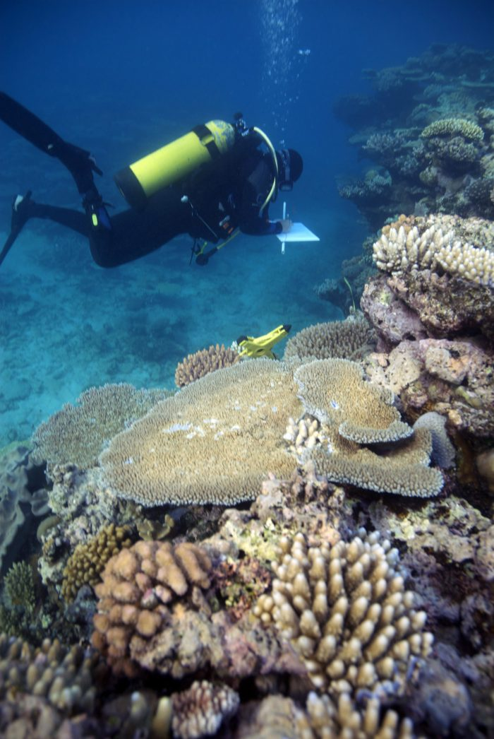 Researchers survey coral on the Great Barrier Reef. Image: Joleah Lamb.