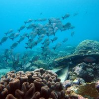 Genetic approaches to cataloging the form and function of biodiversity in our oceans