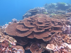 Corals on the Great Barrier Reef. Image: Mia Hoogenboom