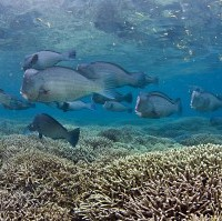 Extinction risk not the answer for reef futures