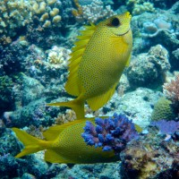 I've got your back – fishes really do look after their mates!