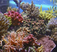 The role of microbes in the acclimatisation of corals