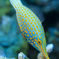 You are what you eat – if you're a coral reef fish