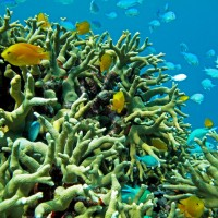 Keeping up with climate change: the evolutionary potential of coral reef fishes to rising sea temperature