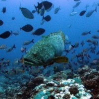Specialised species critical for reefs