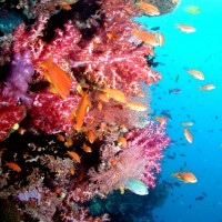 Coral Reefs in a Changing Environment (Canberra)