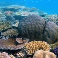 Coral Reefs in the 21st Century (Townsville)