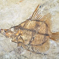 A Long Look Back at Fishes' Extendable Jaws
