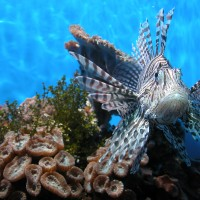 Prevalence of poaching by recreational fishers in the Great Barrier Reef Marine Park