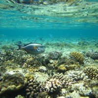 The impact of habitat condition on parasitism of herbivorous coral reef fishes