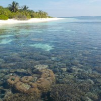 PhD pre-completion seminar: The ecology and dynamics of coral reef communities in an extreme marginal reef environment