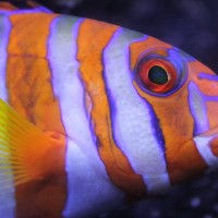 Virginia Chadwick Memorial Reef Talk – Fish on Acid: Will Ocean Acidification Drive Fish Crazy?