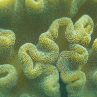 Molecular Bases of Soft Coral Reproduction