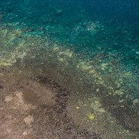 Coral Bleaching Taskforce documents most severe bleaching on record