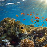13th International Coral Reef Symposium