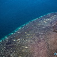 Great Barrier Reef risks losing tolerance to bleaching events
