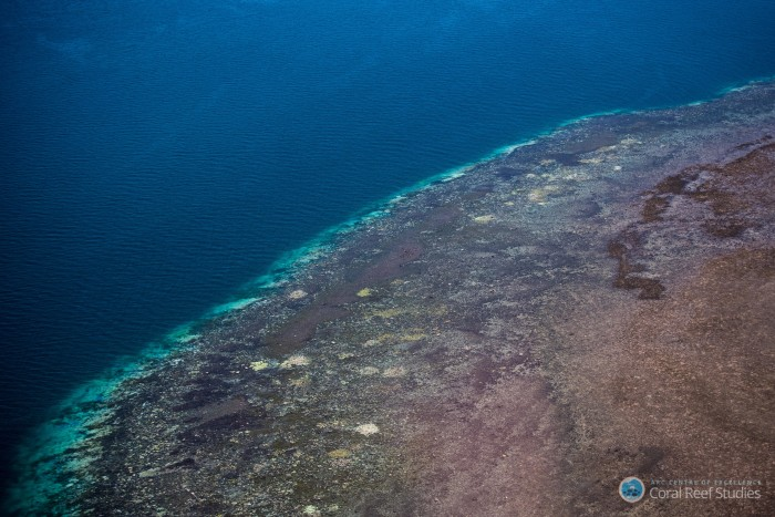 Extensive coral bleaching (white/yellow patches) documented on the Great Barrier Reef during aerial surveys in March 2016. Credit: ARC Centre of Excellence for Coral Reef Studies.