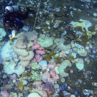 National Coral Taskforce unleashes an armada of experts