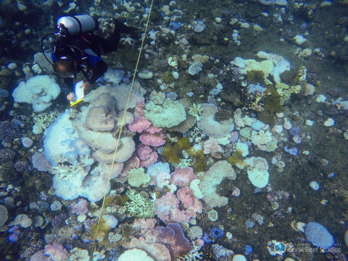Research divers survey coral bleaching on a reef off of Port Douglas. Credit: ARC Centre of Excellence for Coral Reef Studies / Cassandra Thompson.