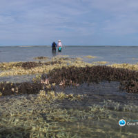 Coral death toll climbs on Great Barrier Reef