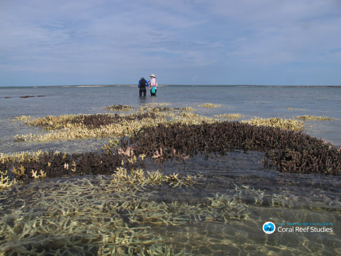 Researchers survey bleached corals in shallow water in the Kimberly region, Western Australia, during current bleaching event. Credit: Chris Cornwall