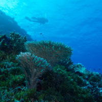 Coral bleaching reaches Coral Sea