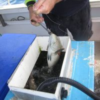 Tapping Fishers' memories reveals long lost fishing trends