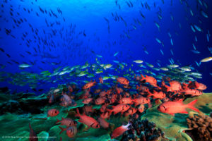 The study asked why some coral reefs punched above their weight. Credit: Tane Sinclair-Taylor