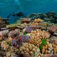 Coral degradation affects how fishes assess risk