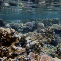 Finding climate change refugia: a scientific framework for identifying temperature and acidification tolerant coral reefs