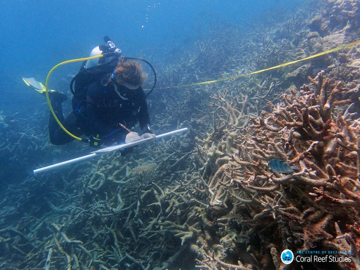 Scientist swims over a field of recently dead branching corals on Day reef, Lizard Island