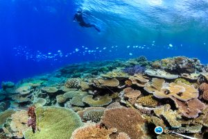 Scientist surveys Rib Reef off Townsville which has escaped coral bleaching