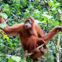 How conservation psychology can facilitate conservation behaviours