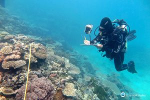 Researcher Grace Frank completes bleaching surveys in the souther Great Barrier Reef