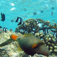 Physiological and behavioural strategies used by fish to mitigate the effects of ocean warming