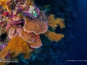 Deep reefs offer no 'lifeline' for shallow coral