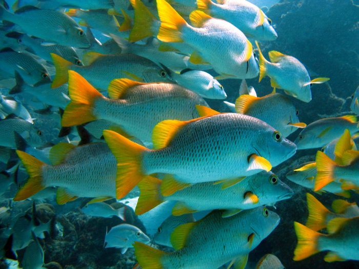 Researchers discovered shortfalls in staffing and funding were hindering the recovery of MPA fish populations. Credit David Gill